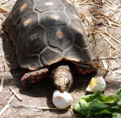 Tortoises & Turtles